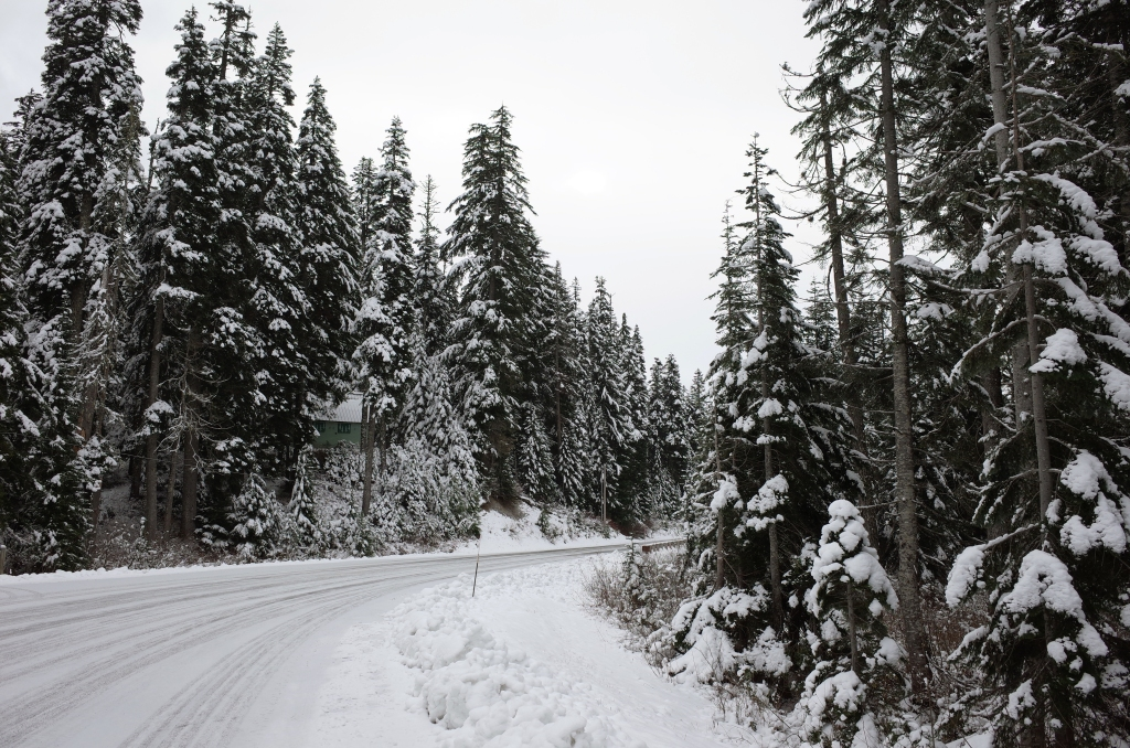 Snow covered mountain road with pine trees on both sides
