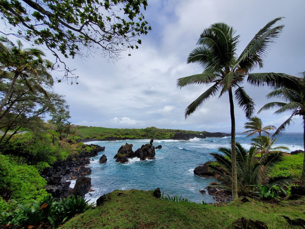 black sand beach with palm trees