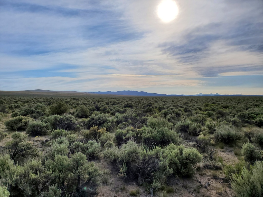 desert landscape filled with sagebrush
