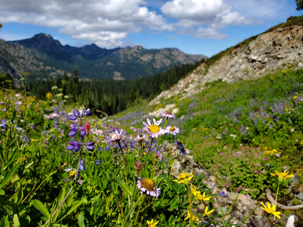 Naches Peak Trail - wildflowers