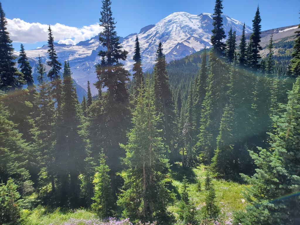 Mount Fremont Trail - view of Mt. Rainier with pine trees in foreground