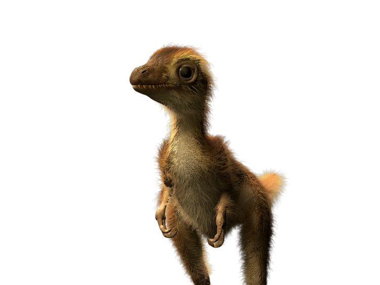 baby t-rex, appears fluffy like baby chick