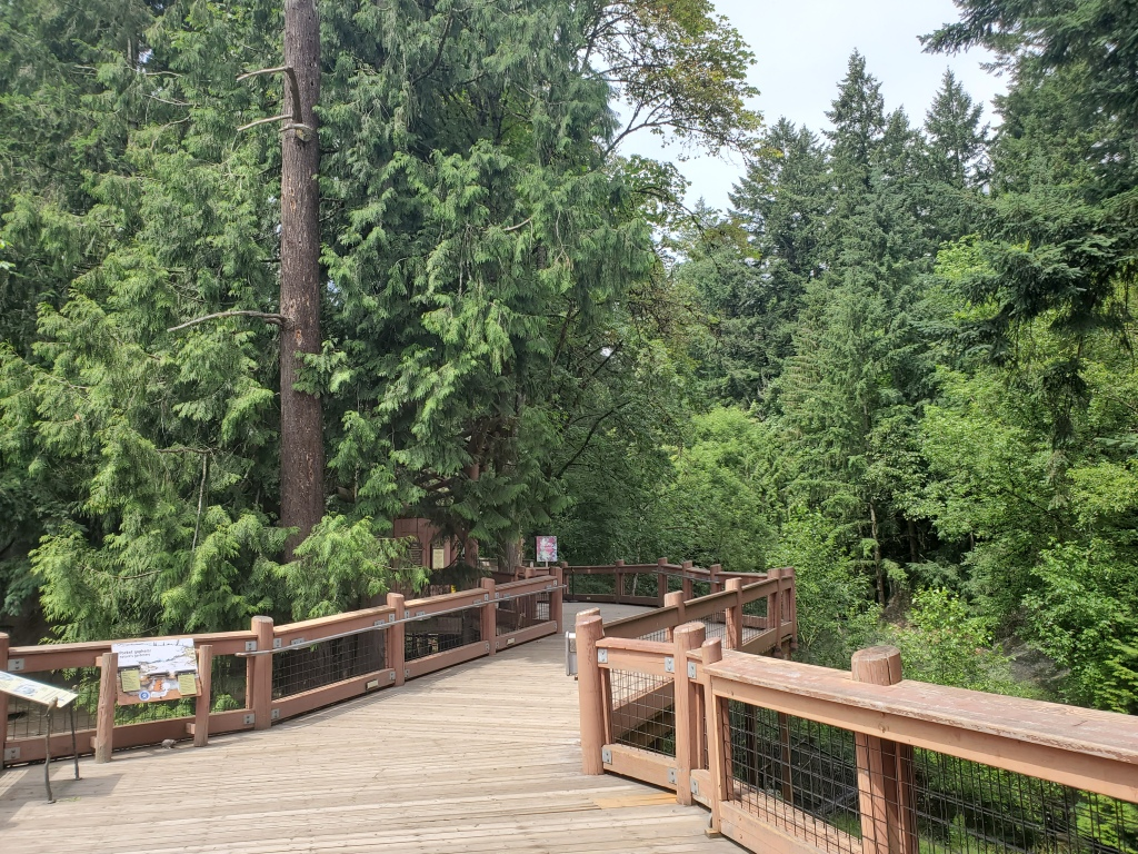 boardwalk into a green forested area