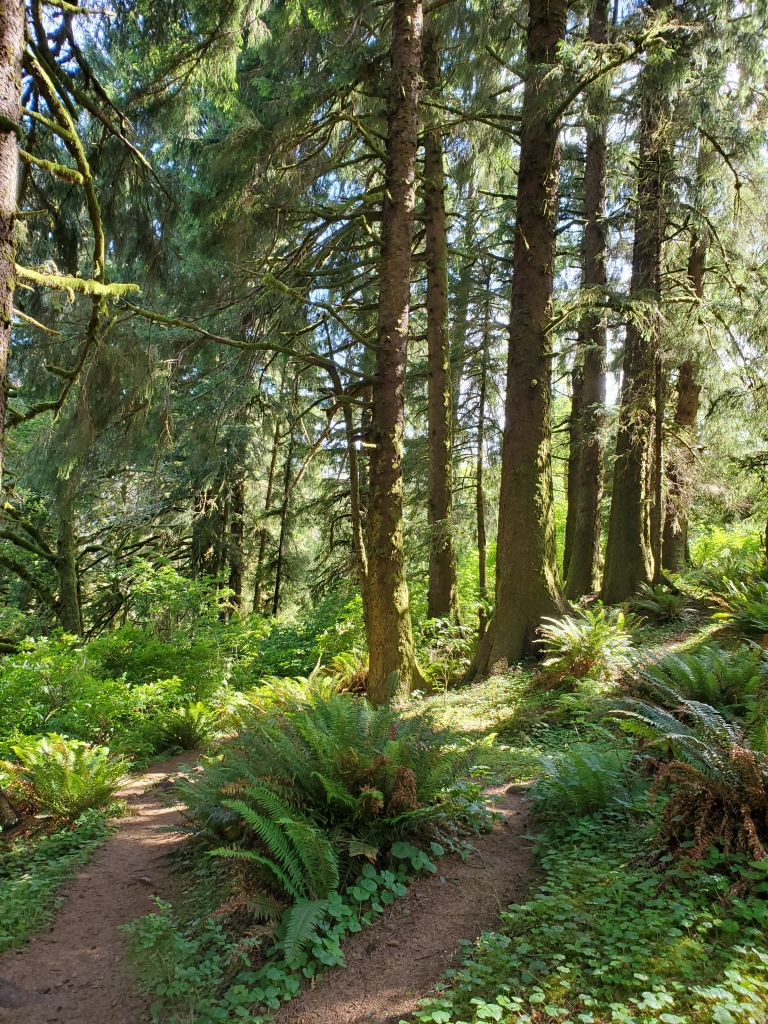 trail through a green forest with tall pine trees