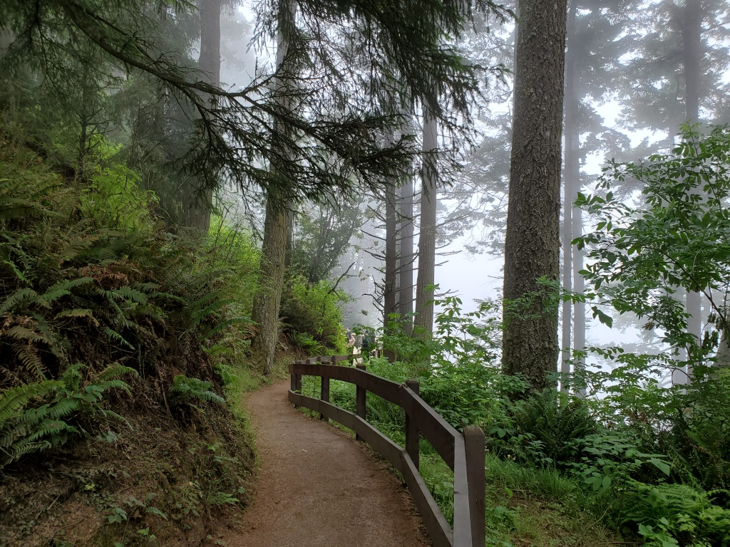 trail leading through forest with tall trees and fog in distance