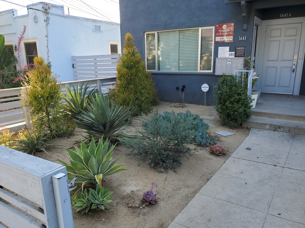 front yard of house with desert plants and dry dirt